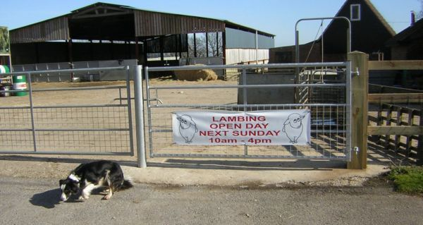 Sheep Dog and farm gate