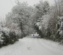 Lane trees snow